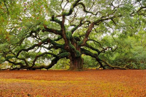 Foto: Oak-tree-guides.blogspot.com.ar