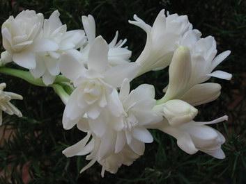 foto Flowers-cs.com