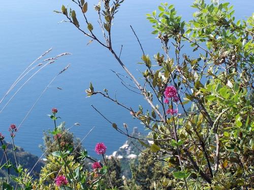 foto: It.wikipedia.org fotógrafo: Porfirio