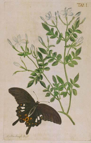 imagen: Botanical.com