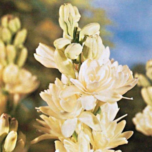 foto: Botanus.com