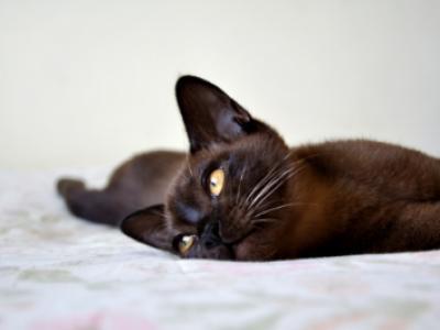 foto: Catmoji.com