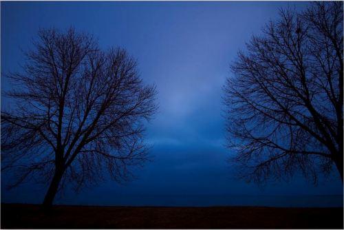 foto: Fineartamerica.com  fotógrafo: Sven Brogren  Blue Hour Trees Silhouette
