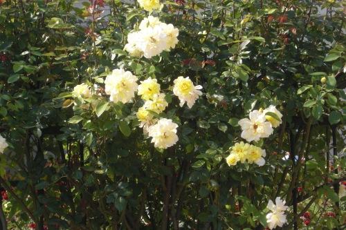 jardines mirabell (14)