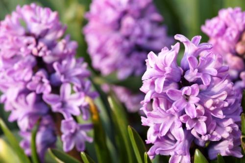 foto: Bulbsonline.com.au