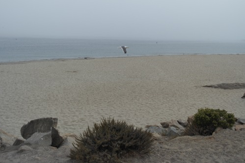 Morro Bay, California - foto: Virginia Blanco