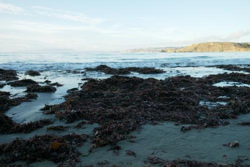 Pacifica, California - foto: Virginia Blanco