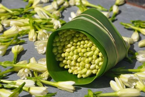 foto: Blog.tahiti.com