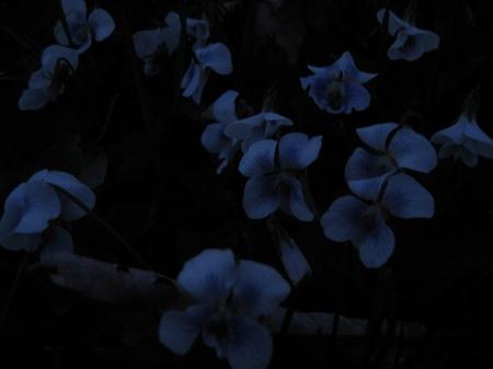 "foto: Flickr.com ""Violets in the dark"" ph: Mikkashar"