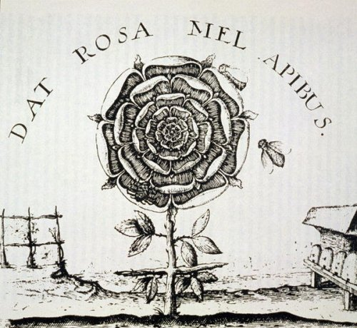 imagen: Magnoliabox.com  artista: Johann Theodor de Bry, Alegoría Rosacruz