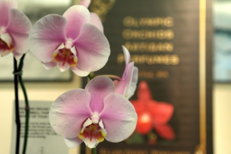 foto: Virginia Blanco  Olympic Orchids