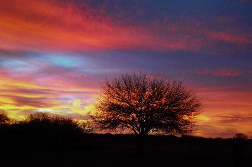 foto: Commons.wikimedia.org fotógrafo: Juanedc  Atardecer en el caldenal, Parque Luro, La Pampa, Argentina