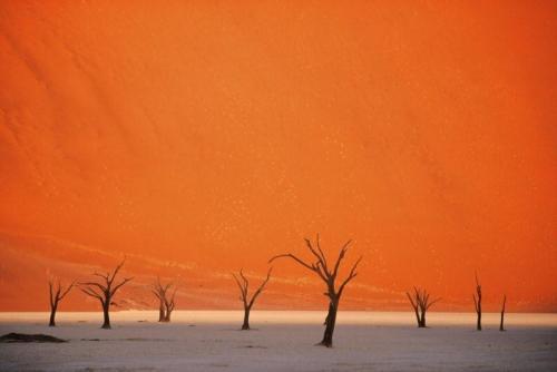 dunas-y-arboles-namibia